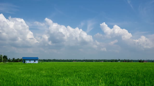 4K time lapse of moving clouds over paddy field at rural area of Selangor, Malaysia.