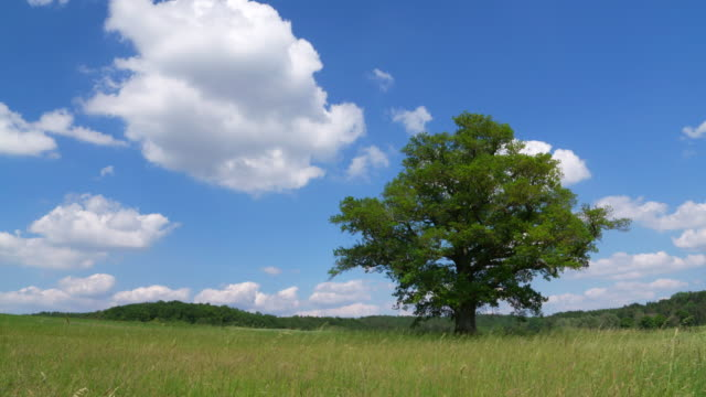 time lapse of moving clouds with tree in meadow. bavaria, germany. - single tree stock videos & royalty-free footage