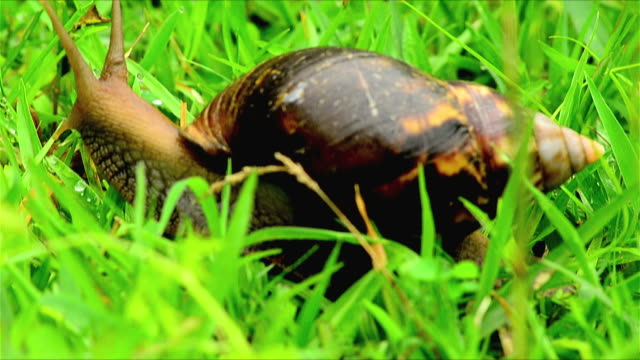 a time lapse of moving snail. - west bengal stock videos and b-roll footage