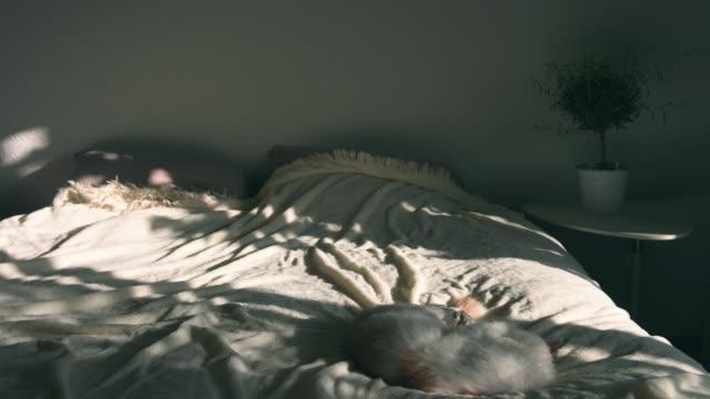 vídeos de stock, filmes e b-roll de lapso de tempo de mover pontos de luz solar na cama e a parede - quarto de dormir
