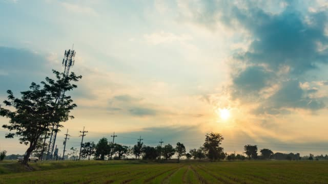 Time Lapse of Rice Paddy with Beautiful Sunrise