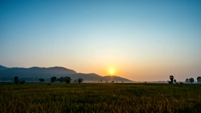 vídeos de stock, filmes e b-roll de lapso de tempo de plantação de arroz com fundo de montanha ao nascer do sol - sugar cane