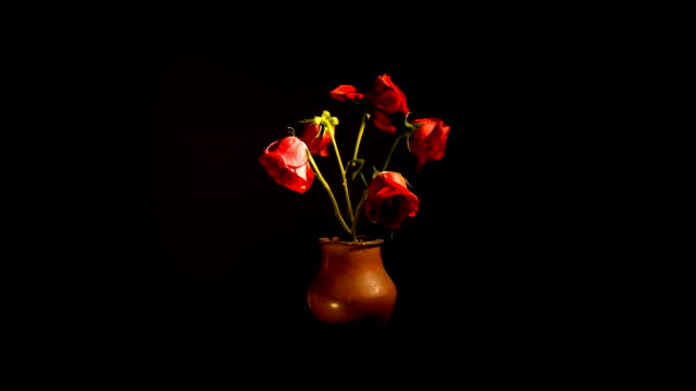 vídeos de stock e filmes b-roll de time lapse of roses wilting - fim