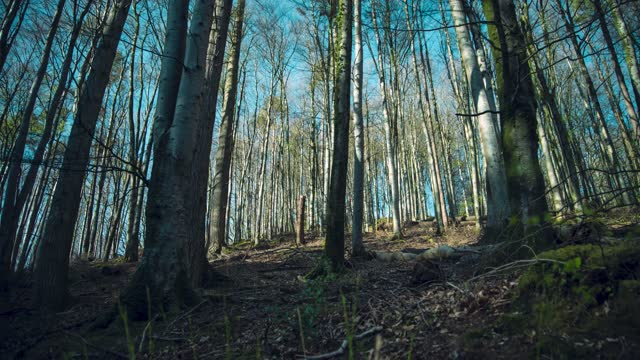 time lapse of shadows and sunlight in an evergreen woodland as sunset approaches on may 13, 2020 in exmoor, uk. - sunlight stock videos & royalty-free footage