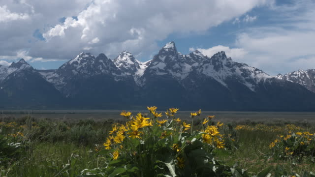 time lapse of snow mountain and storm clouds - wildflower stock videos and b-roll footage