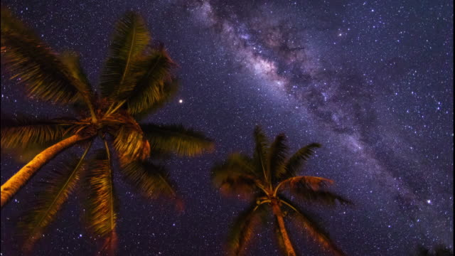 time lapse of stars and milky way above palm trees on south pacific island - south pacific ocean stock videos & royalty-free footage