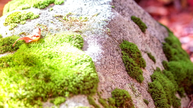 time lapse of sun on mossy rock - moss stock videos & royalty-free footage