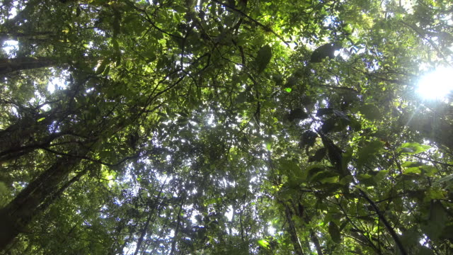 Time lapse of sunlight breaking through the tree canopy of the El Triunfo biosphere reserve.