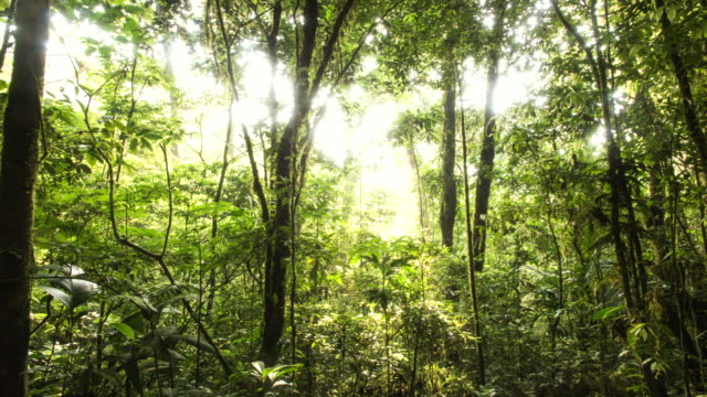 Time lapse of sunlight shining through the trees of the El Triunfo biosphere reserve.