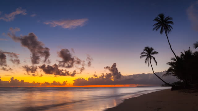ws time lapse of sunrise over tropical beach and palm trees - dominican republic stock videos and b-roll footage
