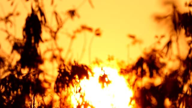 vídeos de stock e filmes b-roll de time lapse of sunrise with big sun - imagem tonalizada