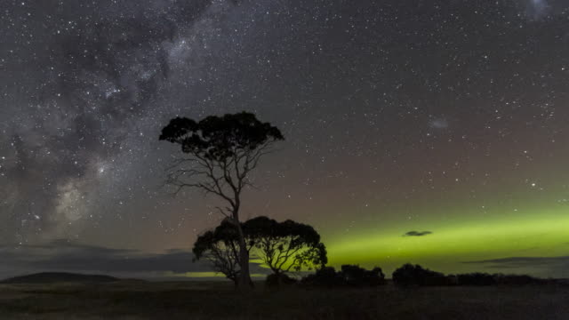 time lapse of the aurora australis or southern lights, along with the galactic centre of the milky way behind gum trees - aurora australis stock videos & royalty-free footage