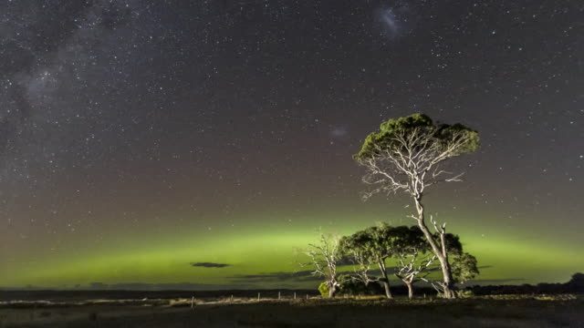time lapse of the aurora australis or southern lights and the milky way behind gum trees. - aurora australis stock videos & royalty-free footage
