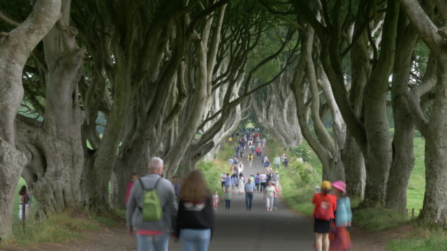 time lapse of the dark hedges with tourists, antrim ireland - 北アイルランド点の映像素材/bロール