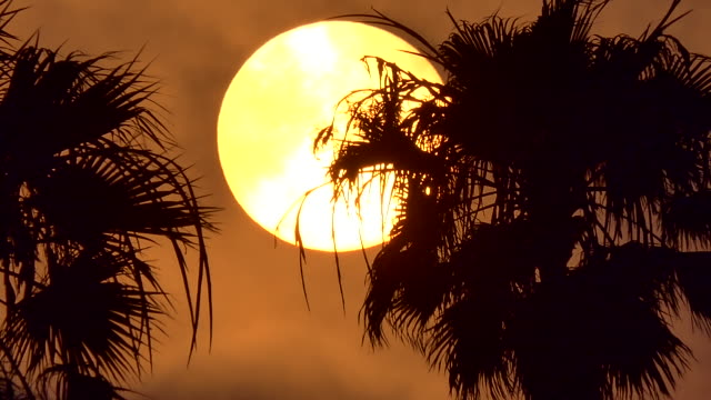 time lapse of the extreme large sun setting between two palm trees - santa monica stock videos & royalty-free footage