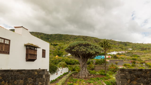 4K time lapse of the millenarian dragon tree with tourists, at Icod de los Vinos, Tenerife, Spain