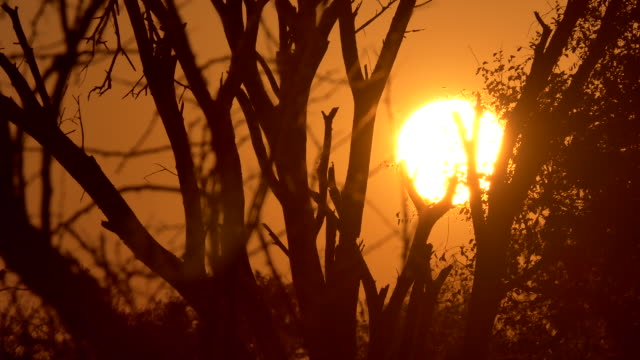 Time lapse of the sunset in the bush country of South Africa in the golden light on a safari
