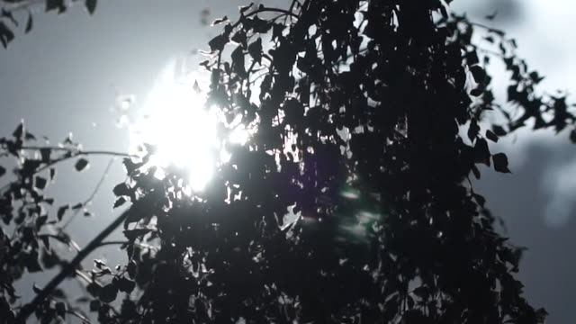 time lapse of trees and clouds during the uk heatwave - sun stock videos & royalty-free footage