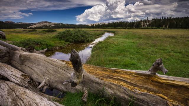 time lapse of tuolumne meadows, yosemite national park - californian sierra nevada stock videos & royalty-free footage