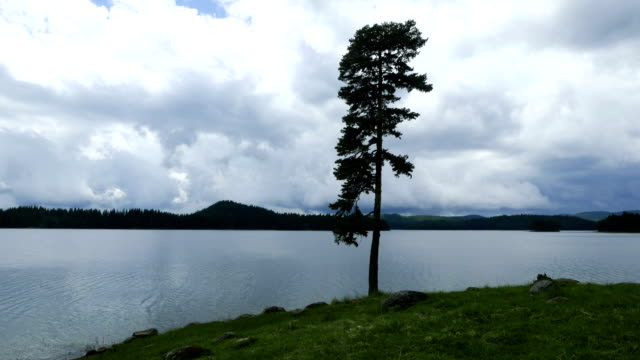 vídeos de stock e filmes b-roll de time lapse of water landscape, a pine tree and moving clouds - pine