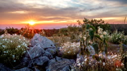 Time lapse of wild flowers among rocks against sun.