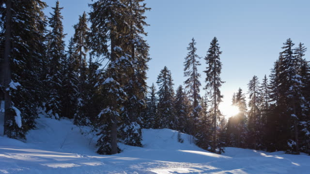 time lapse of winter landscape with fir trees at sunrise - meribel stock videos & royalty-free footage
