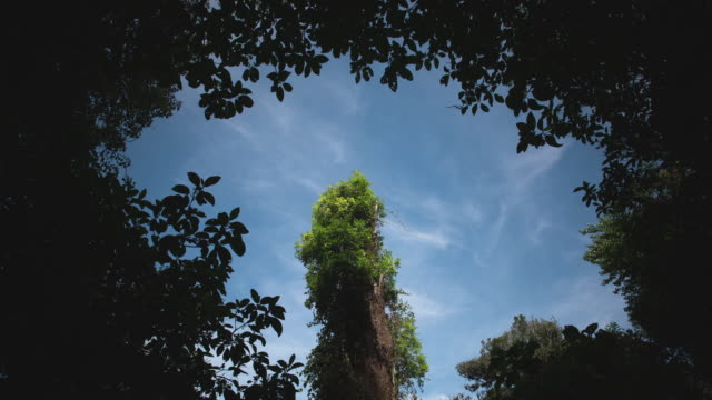 time lapse of wisps of clouds drift over a tree in the el triunfo biosphere reserve. - border stock videos & royalty-free footage