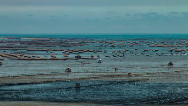 Time lapse: Oyster farm beds in the sea