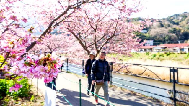Zeitraffer: Menschen genießen Kirschblüten am Kawazu Fluss in Japan