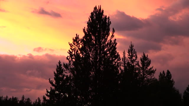 time lapse: pine tree against red sunset - grand teton national park stock videos & royalty-free footage