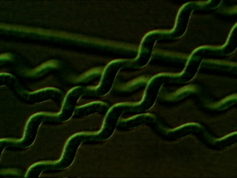 time lapse procaryotic cell (oscillatoriales). blue green algae moving across screen. ecu - cianobatterio video stock e b–roll