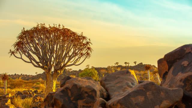 vidéos et rushes de ms time lapse frémissement arbre et des rochers dans le désert ensoleillé, namibie, afrique - sec