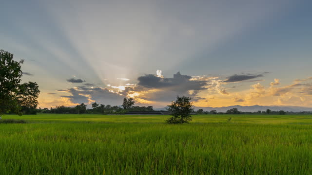 4K Time lapse rice field and sky sunset at Chiang mai, Thailand.