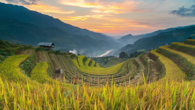 4k time lapse : rice fields on terraced at yenbai vietnam.beautiful terraced rice field in harvest season in sunset in mu cang chai - philippines stock videos & royalty-free footage