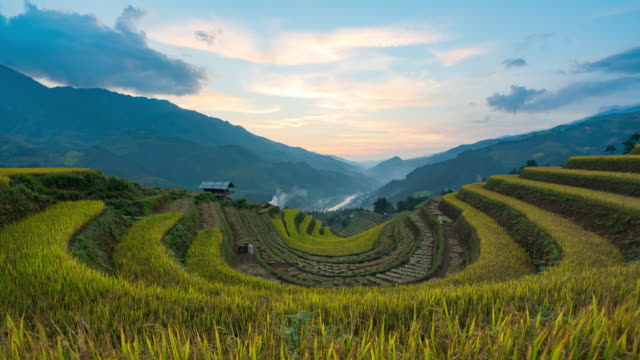 4k time lapse : rice fields on terraced at yenbai vietnam.beautiful terraced rice field in harvest season in sunset in mu cang chai - rice paddy stock videos & royalty-free footage