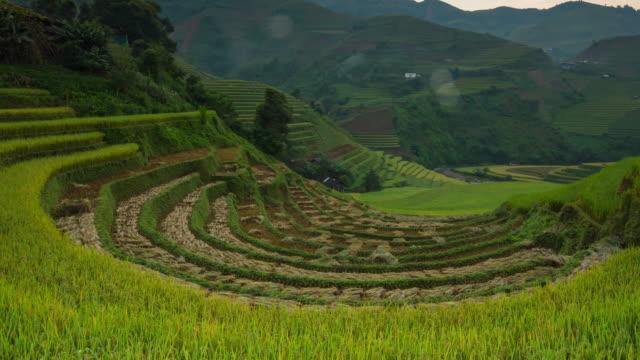 4k time lapse : rice fields on terraced vietnam - beautiful terraced rice field in harvest season in sunset in mu cang chai - paddy field stock videos & royalty-free footage