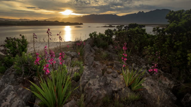 time lapse scenics of western cape, south africa - gladiolus stock videos & royalty-free footage