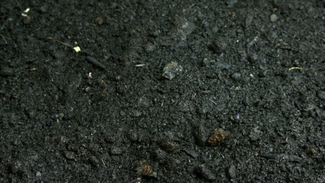 vídeos de stock e filmes b-roll de time lapse seeds growing in soil - solo