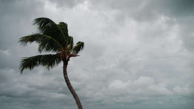 Time lapse sequence of a Palm Tree blowing in the wind as storm clouds from a passing tropical storm race by in the Middle Florida Keys