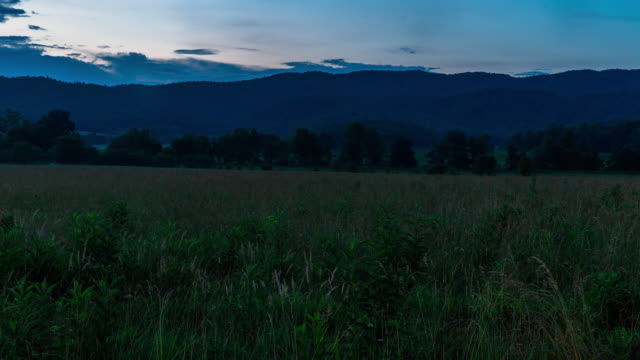 time lapse sequence of fireflies starting to appear at night in the great smoky mountains national park. - appalachen region stock-videos und b-roll-filmmaterial