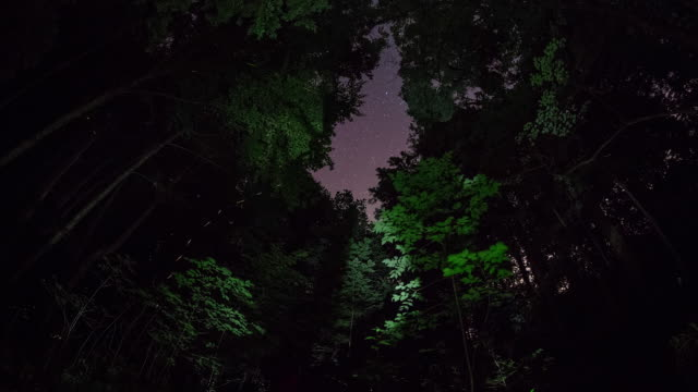 time lapse sequence of fireflies starting to appear at night in the great smoky mountains national park. - グローワーム点の映像素材/bロール