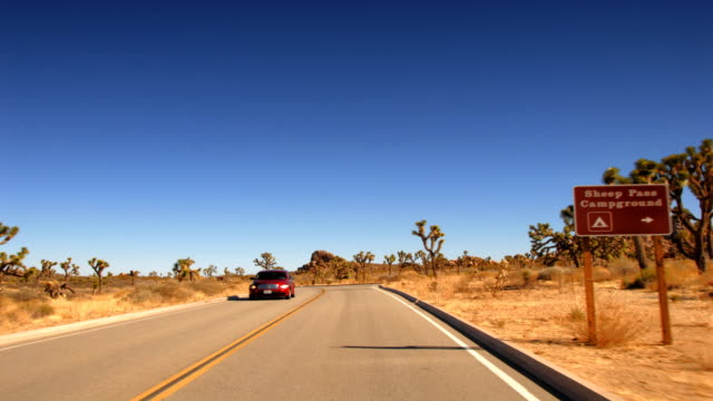 time lapse shot driving through joshua tree in the mojave desert on a sunny spring day. - 熱帯の低木点の映像素材/bロール