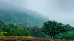 Time Lapse shot of Beautiful fog moving over the mountain in rain-forest at morning