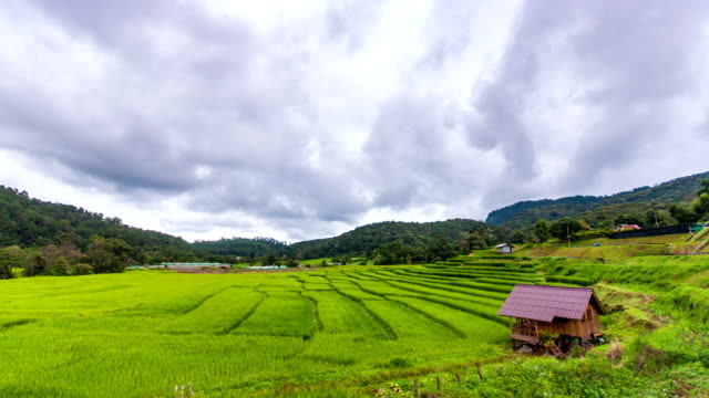 Time Lapse Shot of Beautiful Rice Field with Sunlight and Moving Cloud in th Sky, Chiang Mai, Thailand.