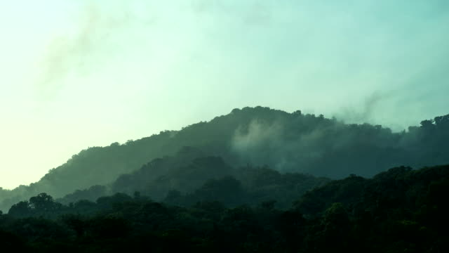 Time lapse shot of mist rolling over the tree canopy of the El Triunfo biosphere reserve.