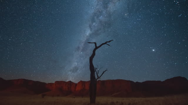 time lapse shot of silhouette dead tree against beautiful star field, scenic view of idyllic milky way over desert - etosha national park, namibia - long exposure stock videos & royalty-free footage