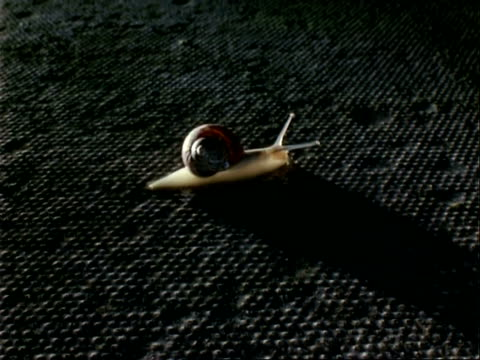 ms time lapse single snail moves over concrete slab from left to right, at night - snail stock videos & royalty-free footage