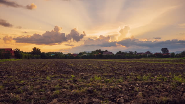 4k time lapse : soil preparation and beautiful sunrise in morning - cereal plant stock videos & royalty-free footage