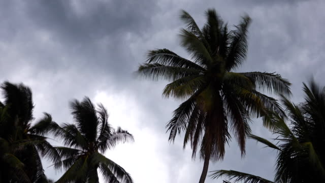 time lapse: storm blowing coconut palm trees. - palm tree stock videos & royalty-free footage