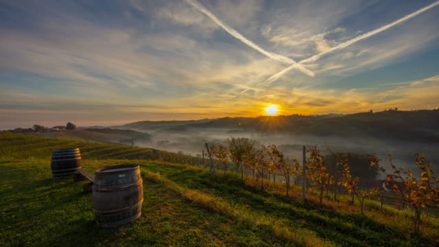 ws time lapse sunrise in distance over tranquil,idyllic autumn vineyard,jeruzalem,slovenia - wine cask stock videos and b-roll footage